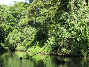 Parco Tortuguero