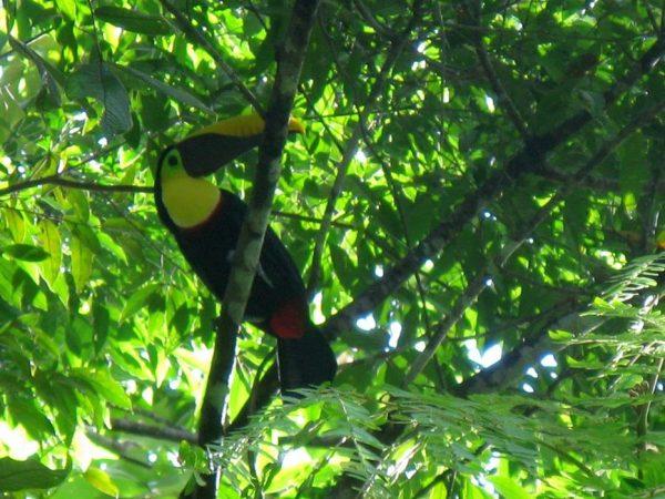 Animali on demand al parco Corcovado. Costa Rica.