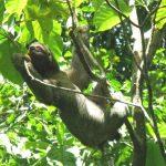 Come creare un itinerario faidate in Costa Rica
