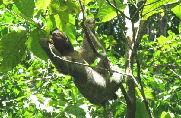 Consigli su come creare un itinerario faidate in Costa Rica